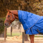 Storm Buster Rain Sheet Neck