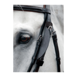 Capriole Bridle Blinkers