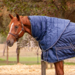 Stable Buster Duvet Neck Piece